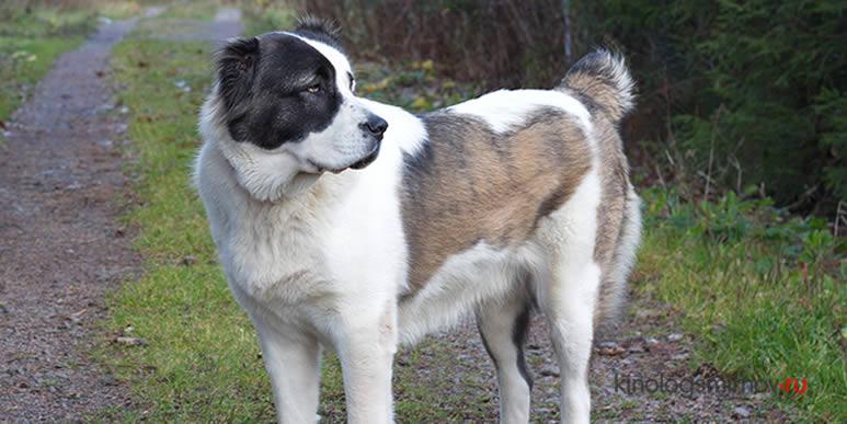 18 пород собак, которые подойдут пожилым людям