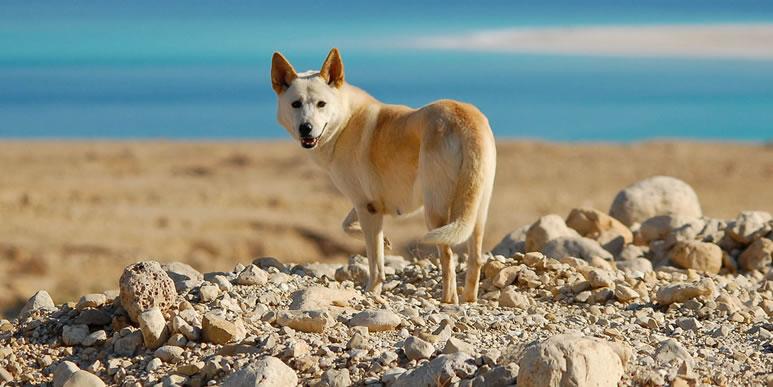 20 удивительных пород собак, о которых вы пока даже не слышали