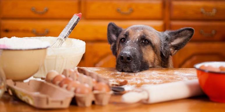 Четыре простых блюда для собаки с расстройством пищеварения