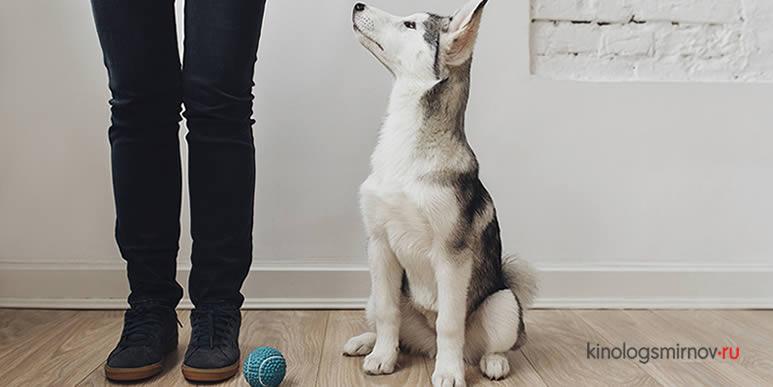 Игра- самый простой способ проверить обучаемость собаки