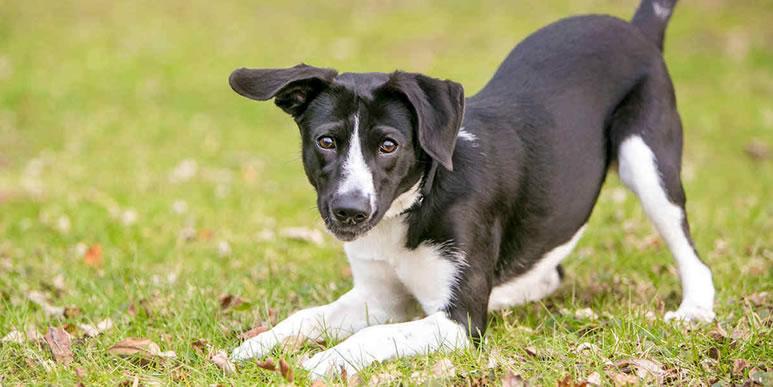 Поощрение излишнего возбуждения собаки приводит к стрессу