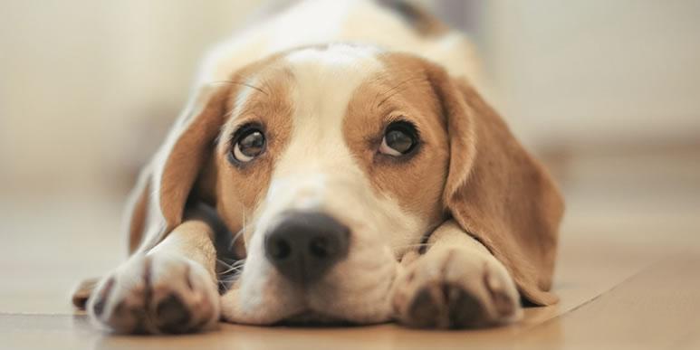 Что делать, если на прогулке собаку напугал человек?