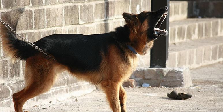 Несколько слов владельцам агрессивных собак