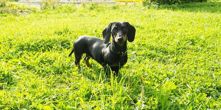 Как исправить агрессивное поведение взрослой собаки?