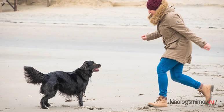 Собаки «обмениваются» аллергиями со своими владельцами