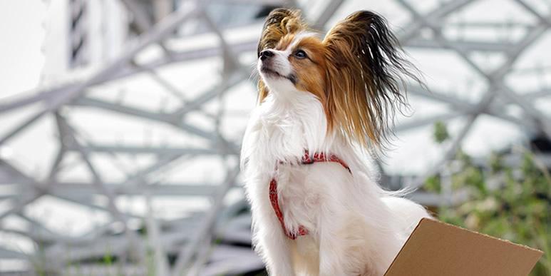 Знакомьтесь: собаки, работающие в компании Amazon
