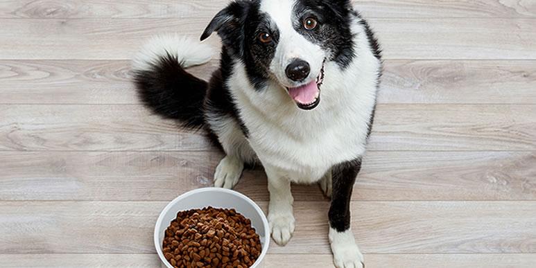Анорексия: что делать, если собака плохо ест или часто привередничает?