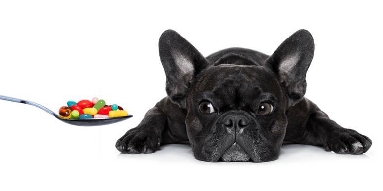 Статья по авитаминозам у собак для журнала