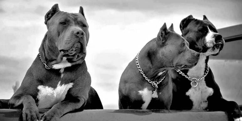 Как окружающие относятся к собакам с купированными ушами?