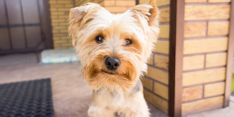 Почему моя собака лает по малейшему поводу и дома, и на улице?