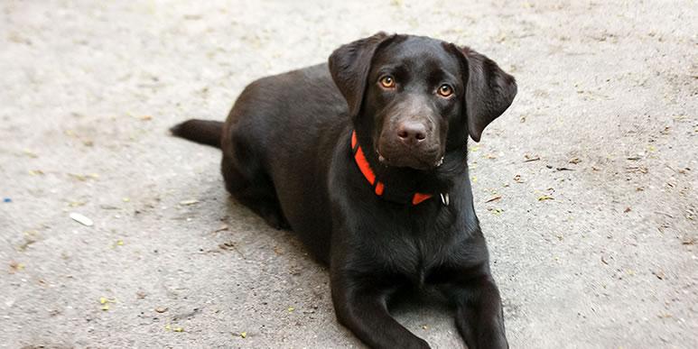 Как помочь собаке стать смелее и уверенее?