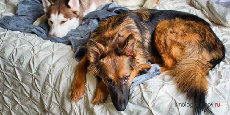 7 случаев, когда собаке не место на вашей кровати