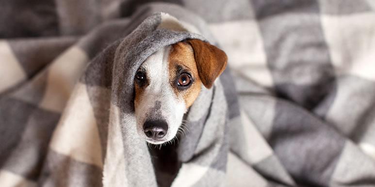 Вернуть по гарантии: кто должен решать проблемы с собакой?
