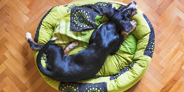 Шесть самых удобных лежаков для собак