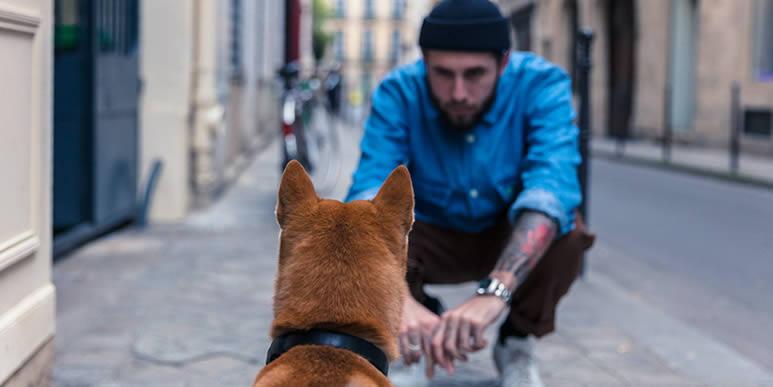 Каких людей собаки кусают чаще всего?