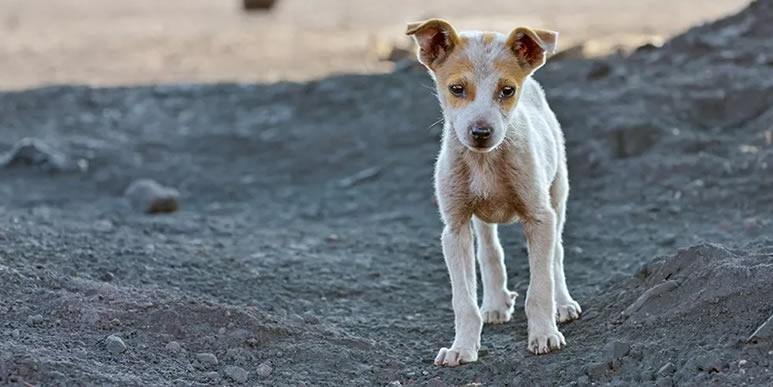 «Убивают ради забавы»: как домашние собаки стали самыми опасными хищниками