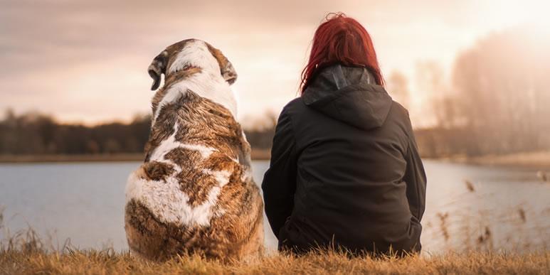 Стоит ли заводить собаку при нехватке времени?