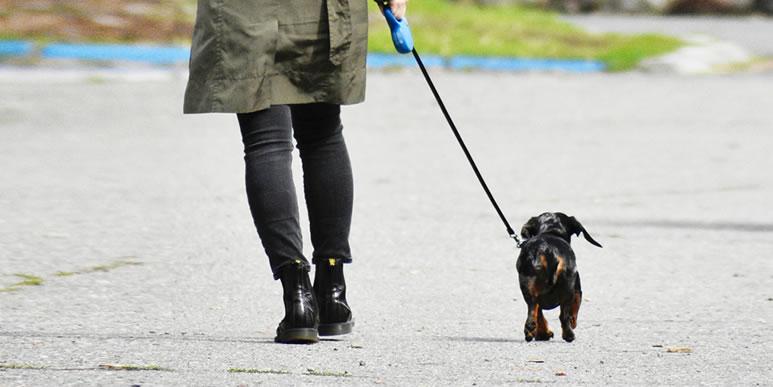 Некогда, но очень хочется: десять пород собак, подходящих занятому человеку