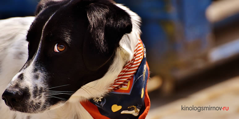 Что означают собачьи сигналы примирения и работают ли они на самом деле?
