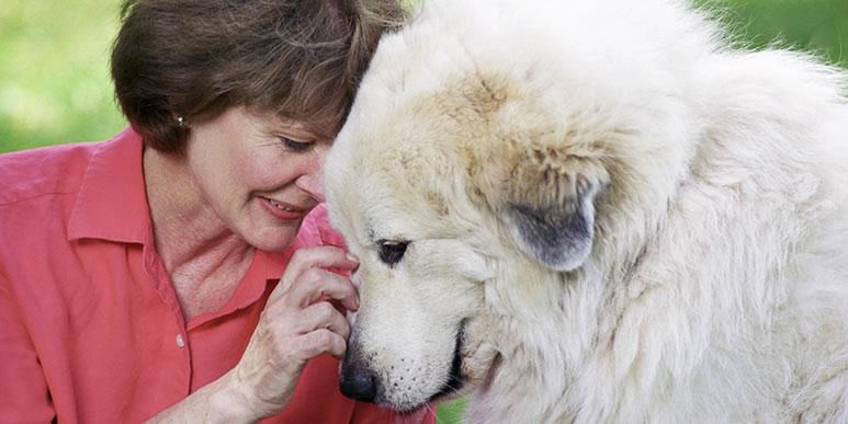 Можно ли успокаивать собаку, если она боится?
