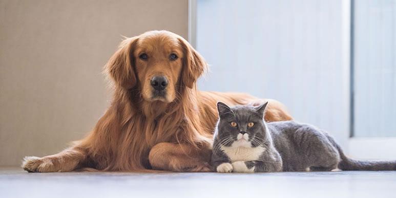 «Кошатники» более склонны к творчеству, а «собачники»- к дисциплине.