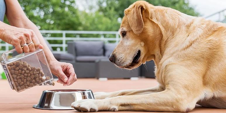 Как быстро и просто перевести собаку на сухой корм