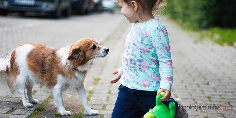 Почему собаки кусают детей?