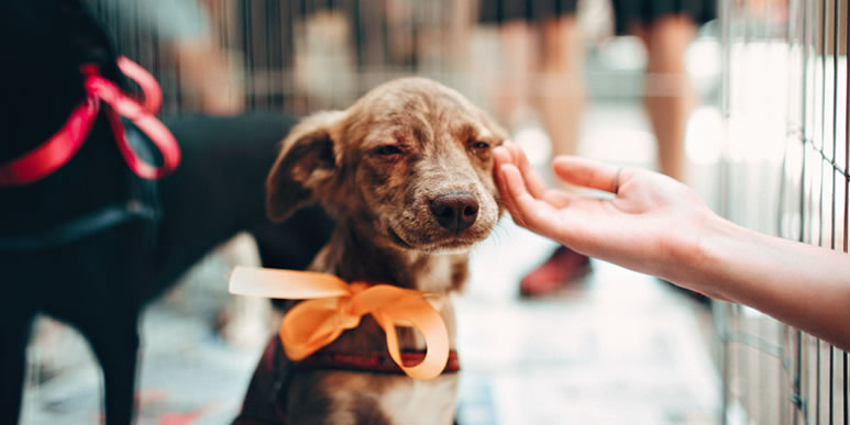 Ошейник, поводок и миска похлебки: сколько на самом деле стоит содержание собаки?