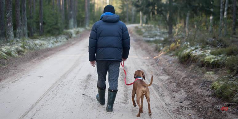 Правда ли, что собакам лучше жить за городом?