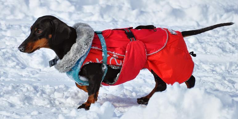 Какая одежда лучше всего подойдет собаке на зиму?