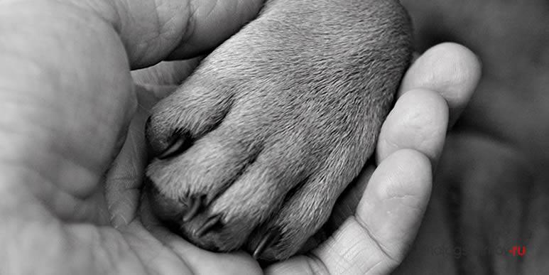 Смерть собаки- это не шутка: пять причин принимать горе от потери друга всерьёз