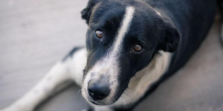 Старческое слабоумие у собак: симптомы и помощь
