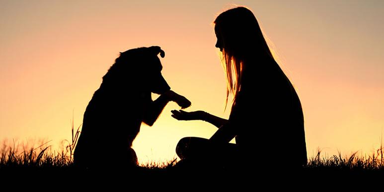 Самое грустное, что собаки и кошки не помогают справиться с депрессией