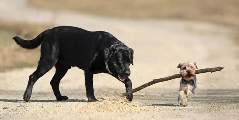 Способна ли собака отличить сородичей от остальных животных?