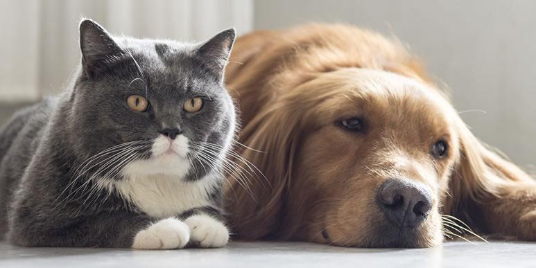 Могут ли в жизни подружиться котенок и щенок?