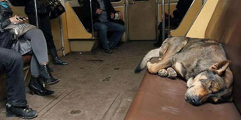 Собаки и городской общественный транспорт
