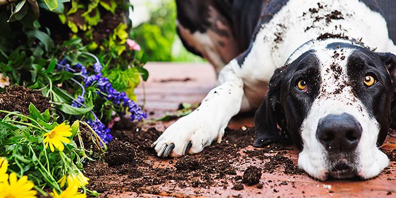 Несколько советов по содержанию собаки на дачном участке