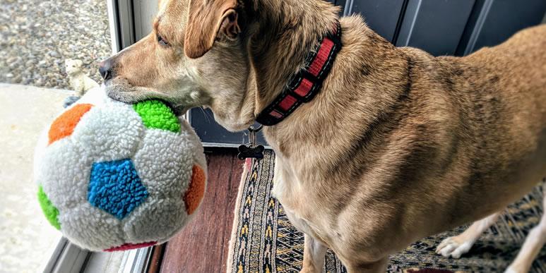 Собака встречает каждого члена семьи по-своему