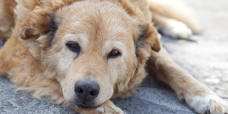 Боль может сильно влиять на поведение собаки