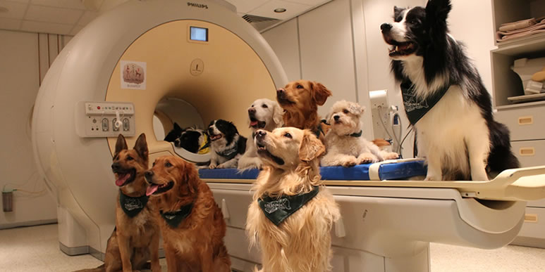 Как селекция пород изменила строение мозга собаки?