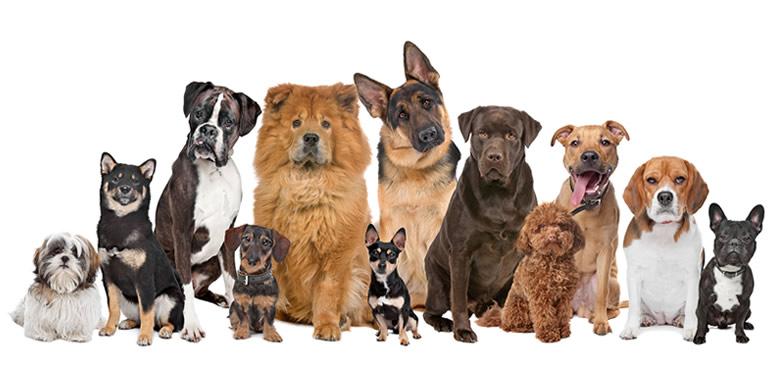 Размер имеет значение: как не прогадать с выбором собаки?