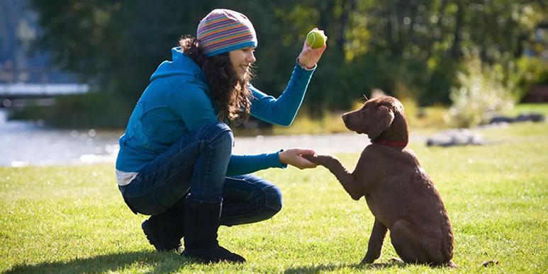 Собаки способны запомнить любые действия человека