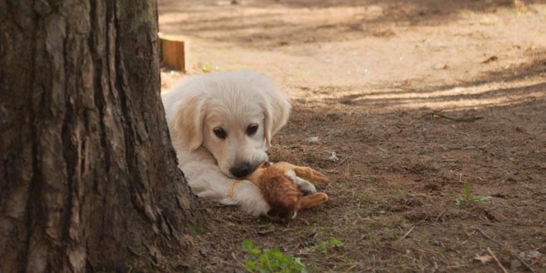 Что делать, если маленький щенок просыпается слишком рано и требует общения?
