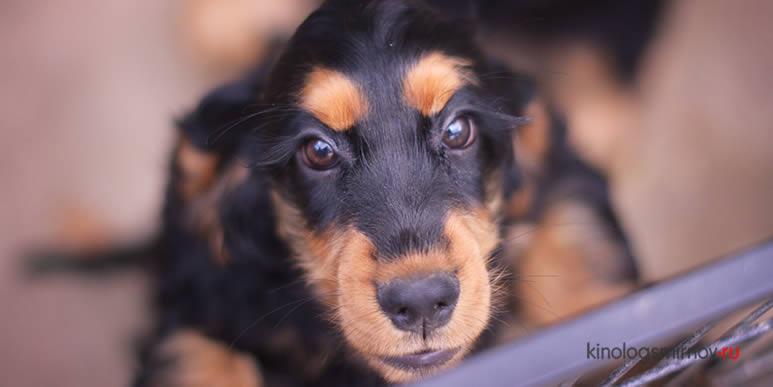 Что поможет маленькому щенку вырасти уверенной в себе и счастливой собакой?