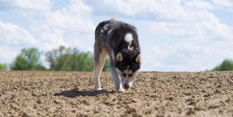 Почему собаки едят землю и как на это реагировать?