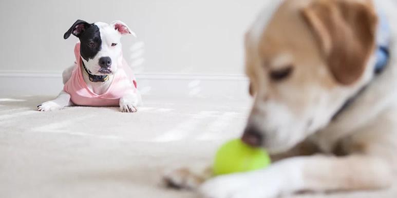 Собаки способны ревновать так же, как и люди