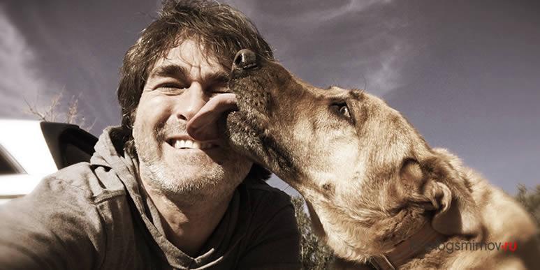 Собаки не просто способны узнавать хозяина в лицо