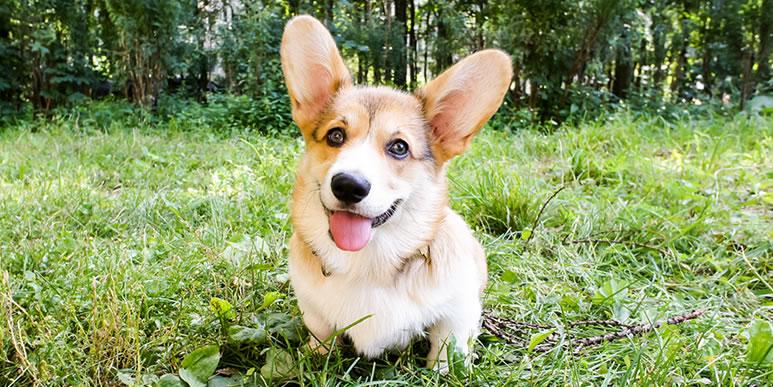 Как помочь собаке, которая боится ходить в туалет на улице?