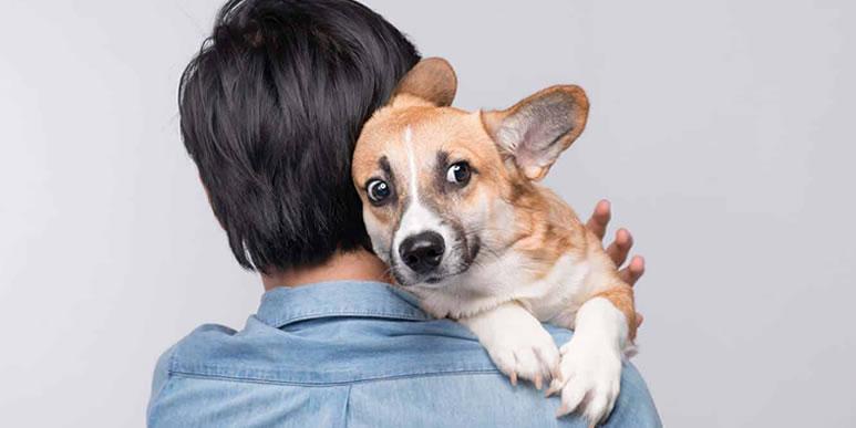 Не вылечить, но облегчить: 7 способов помочь собаке, которая боится