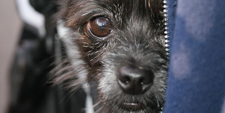 Чего боятся собаки? Несколько слов о самых страшных фобиях